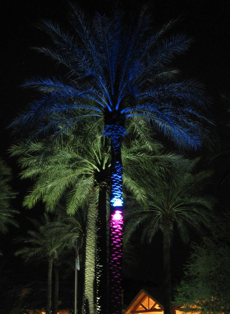 Led Lights For Palm Trees!