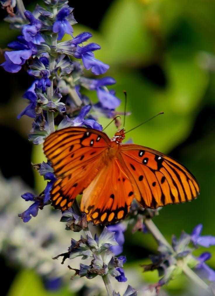 70 Best Butterflies At Coastal Georgia Botanical Gardens Images On  Pinterest | Botanical Gardens, Butterflies And Coastal