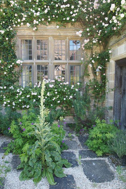 roses climbing around country house windows
