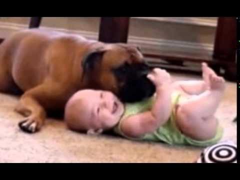 video anjing menggelitik bayi