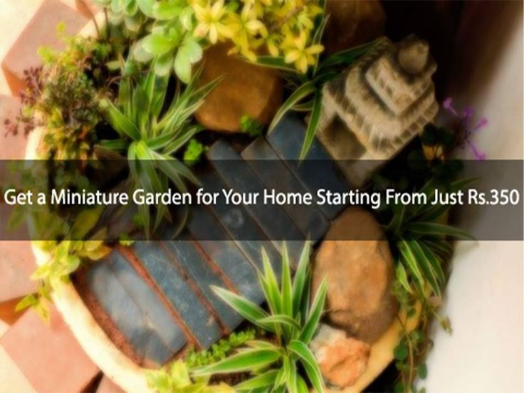 Get a Miniature Garden for Your Home Starting From Just Rs. 350! Address: 27, 4th Cross, 5th Main Jaymahal Bangalore  Contact: 9611333448 #Garden #MiniGarden #MiniatureGardens #Plants #personalizedgardenblueprint #planning #procurement #implementationoftheplants #reused #recycled #earthenmaterials #organicnutrients #growthenhancers #cocoapeat #miniaturepots #MuddyWaters #MuddyWatersMiniGardens #CityShorBangalore