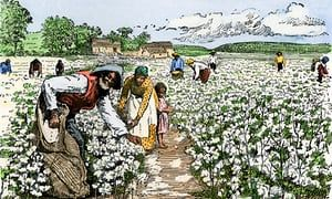 African-American field hands picking cotton in the late 1800s. Slavery was replaced by economic bondage.