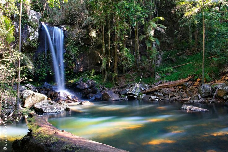 Experience the magic of Curtis Falls at Tamborine Mountain, Queensland, Australia