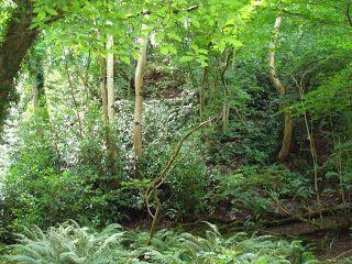 Dog walks: enniskerry - woodland walk | A dog's paw