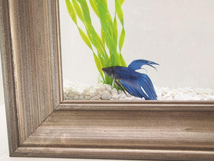Betta diy fish tank ideas glitter 39 n glue diy framed for Fish tank glue