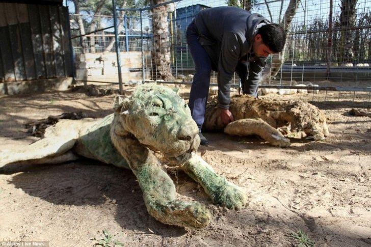 Cierran el peor zoológico del mundo. Animales morían de hambre y convivían con ejemplares disecados