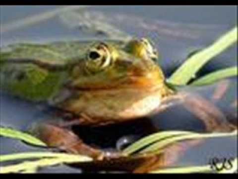 *▶ LIEDJE: Dj-Maarten: Ik Ben Een Kikker! Heel vrolijk!!! Stuiteren maar!