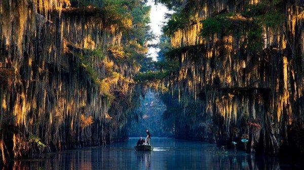 Луизиана луизиана, Природа, шакалы, Америка, длиннопост
