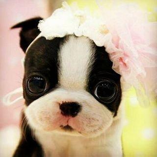 Amor, compañía y ternura... Y mucho más es lo que nos producen estas mascoticas.  Y en Vintro no nos podíamos quedar sin celebrar el día nacional de los perritos.  Feliz Noche para todos nuestros followers.  www.vintrostore.com  #nationaldogday #dogs #beautiful #nice #pink #perro #beautiful #puppie #dianacionaldelperro