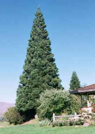 High Desert Fact Sheets from Moana Nursery: Reno, Sparks