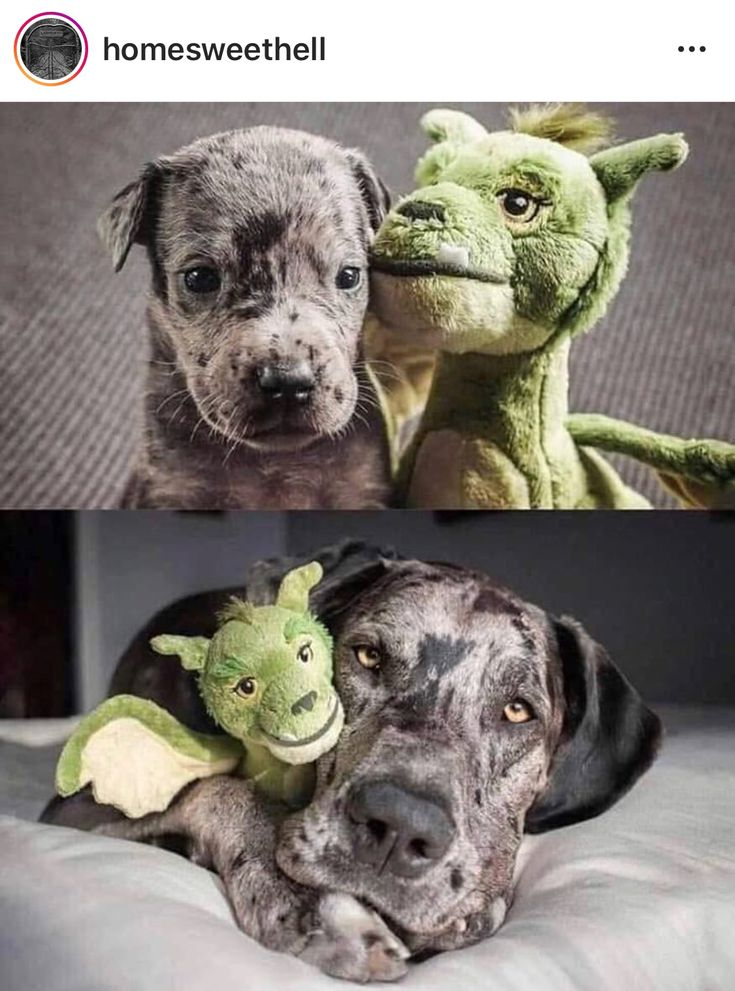 Pin by Julie Stead on great danes/my dogs Cute animals