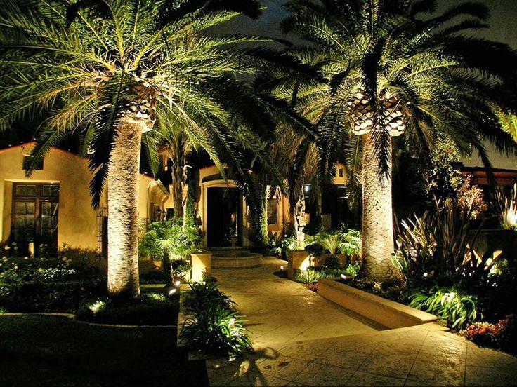 Lit palm trees