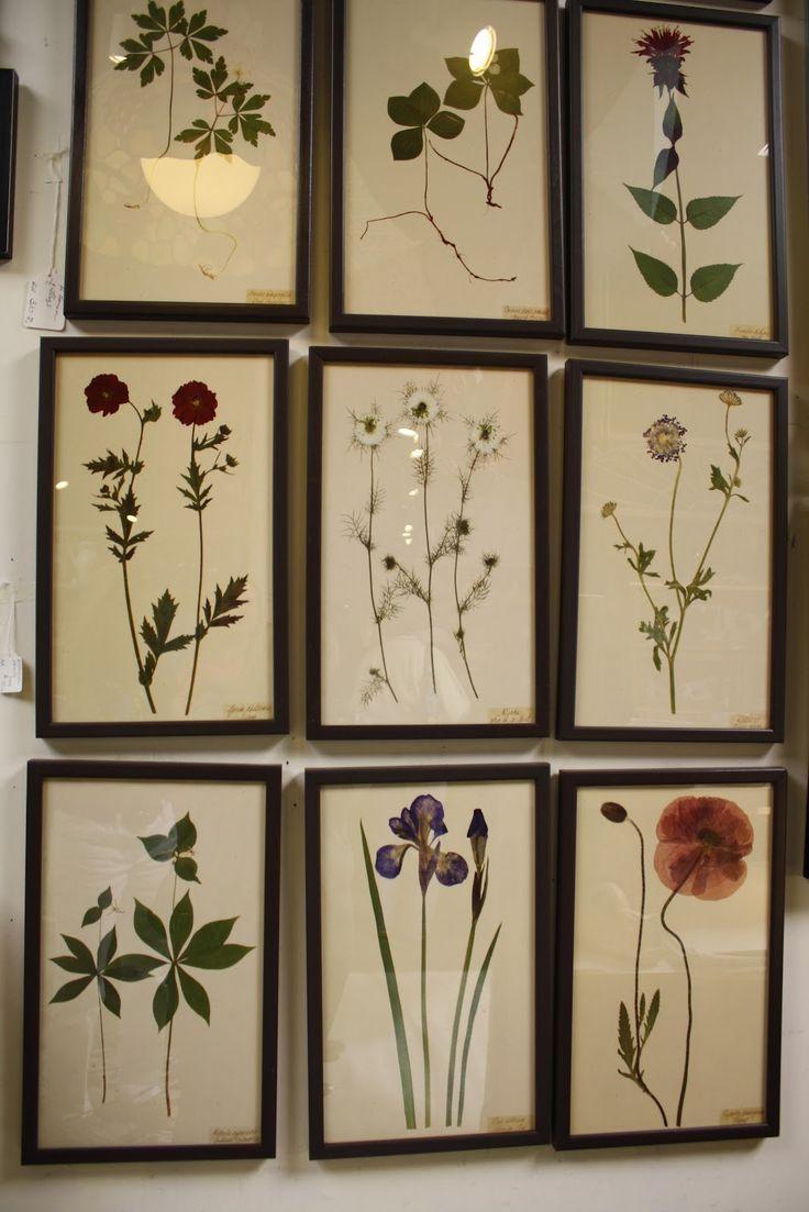 Die gepressten Blumen, die ihre Familie auf dem Flur als Dekoration und