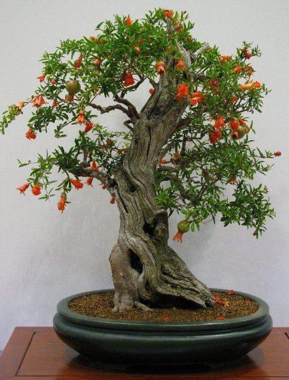Pin Von Graf Matthias Auf Bonsai Bonsai Bonsai Baum Und Garten