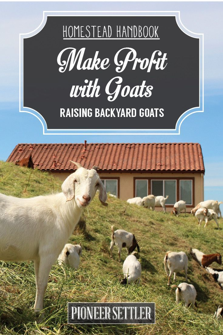 Check out Raising Goats For Profit [Chapter 9] Raising Goats at http://pioneersettler.com/raising-goats-for-profit/