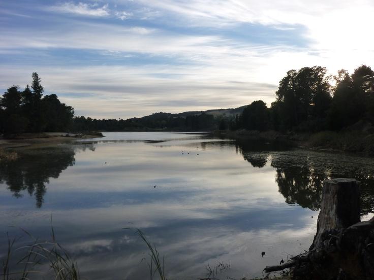 the still reflection on lake sambell, beechworth.