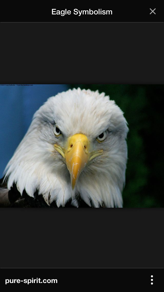 What Does A Eagle Symbolize The Best Eagle 2018