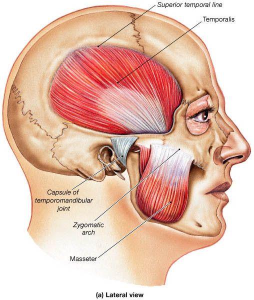 mastication and facial