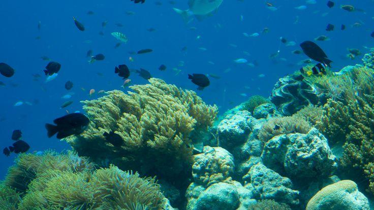 Underwater Ltd.