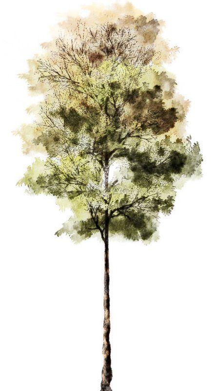 Silueta árbol 1