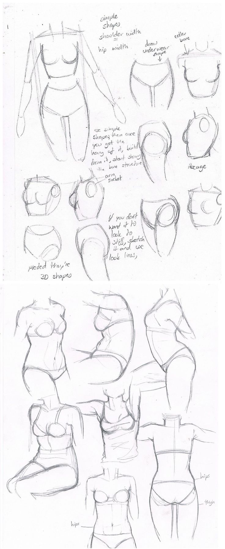 Today's Drawing Class: Drawing the Female Body |  female body torsos by may12324.deviantart.com*