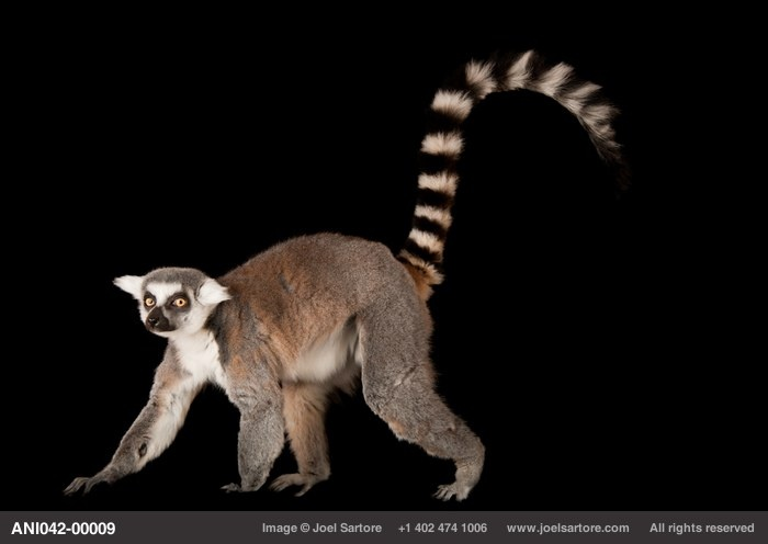 """""""The Biodiversity Project"""" #JoelSartore and his ever important project to help save the world's plant and animal species. Check it out!"""