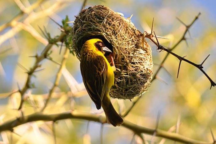 Los nidos de aves más raros y hermosos que hayas visto