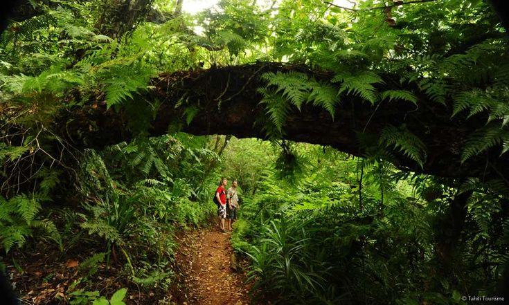 Hiking on Moorea, Tahiti