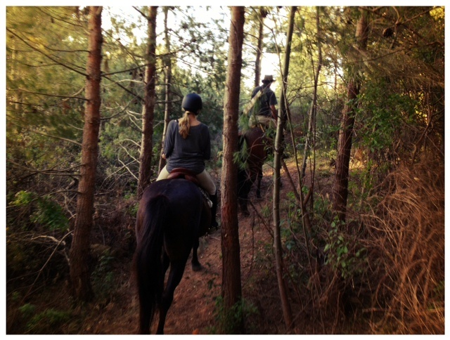 Riding our new forest trail - still needs a little trimming in places, but the general consensus is STUNNING!
