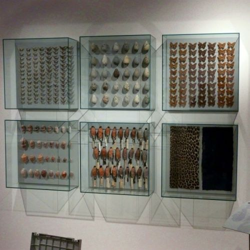 Quality Museum Display Cases & Cabinets | Access Displays Glass boxes on wall
