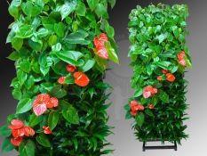 фитомодули, фитомодули HydroFalls, вертикальные сады