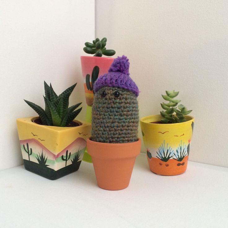 Beanie cactus