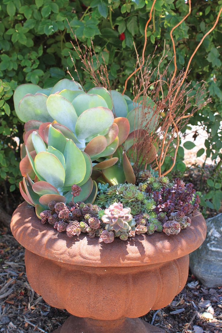 244 best cacti, succulents, etc images on pinterest   succulents