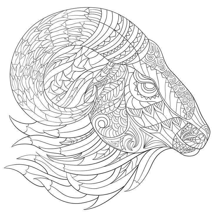 Wild Kingdom Adult Coloring Book (31 stress-relieving designs) (Artists' Coloring Books): Peter Pauper Press: 9781441320124: Amazon.com: Books