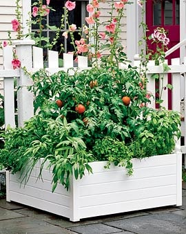 I'm going to try this large (self-watering) container for a small vegetable garden on my patio.