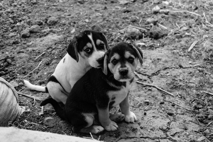 puppies - null
