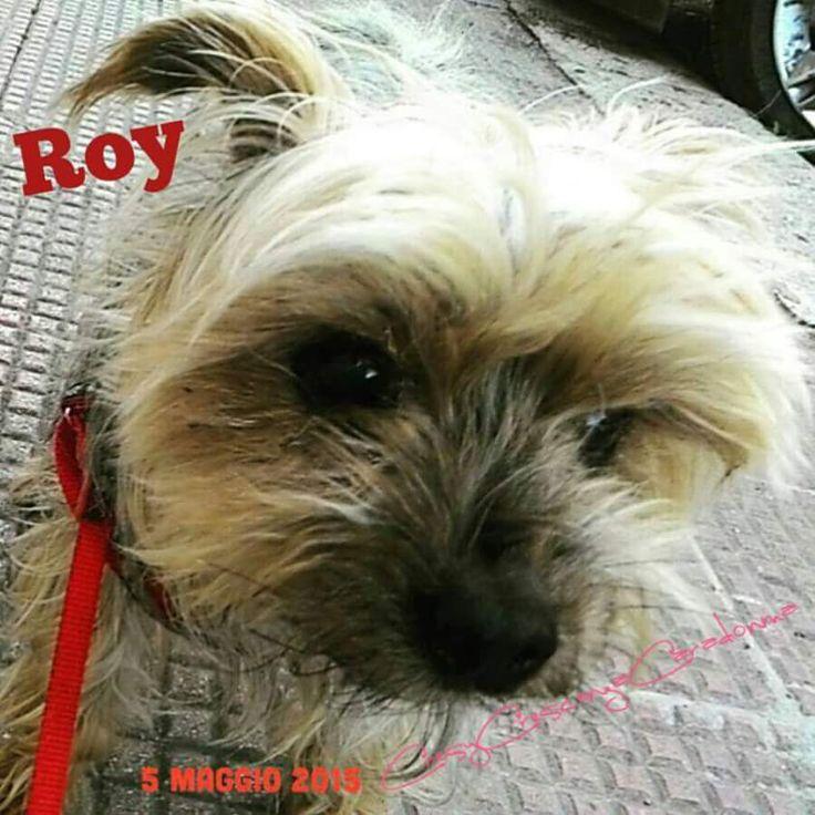 Ciao amico mio peloso Roy