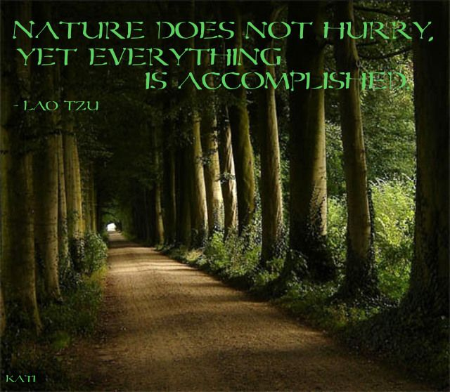 Nature quote: God Creations, The Roads, Favorite Places, Trees Tunnel, Secret Places, Dark Forests, Mornings Coff, Earth Day, Dirt Roads
