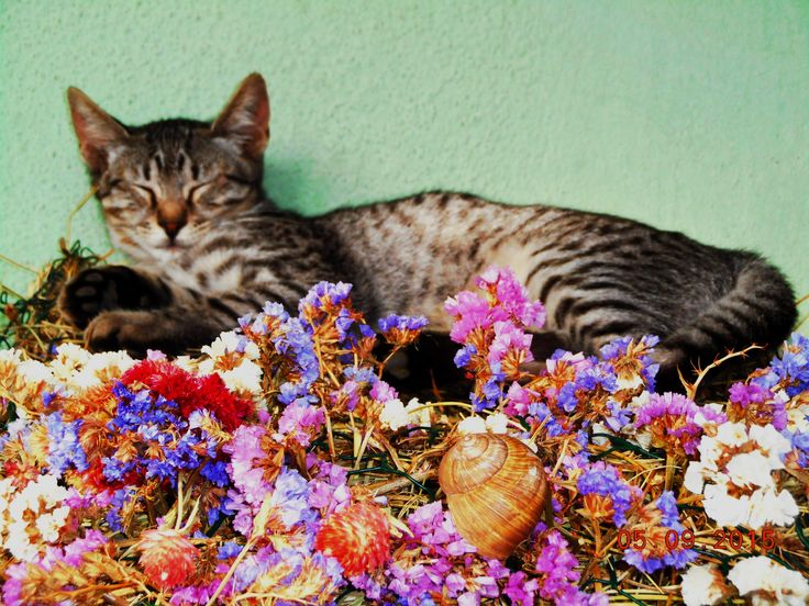 A virágpárnán