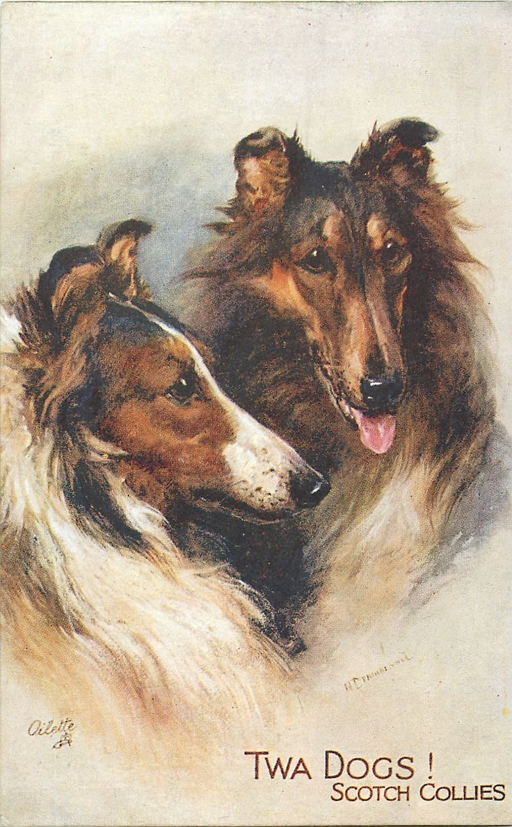 TWA DOGS! SCOTCH COLLIES