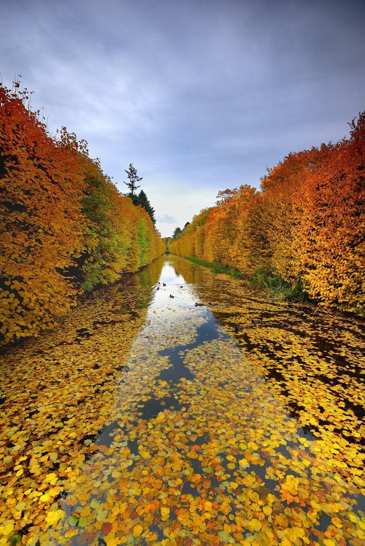 ~~Park in Gdansk Oliwa ... | autumn in Poland | by Mirek~~
