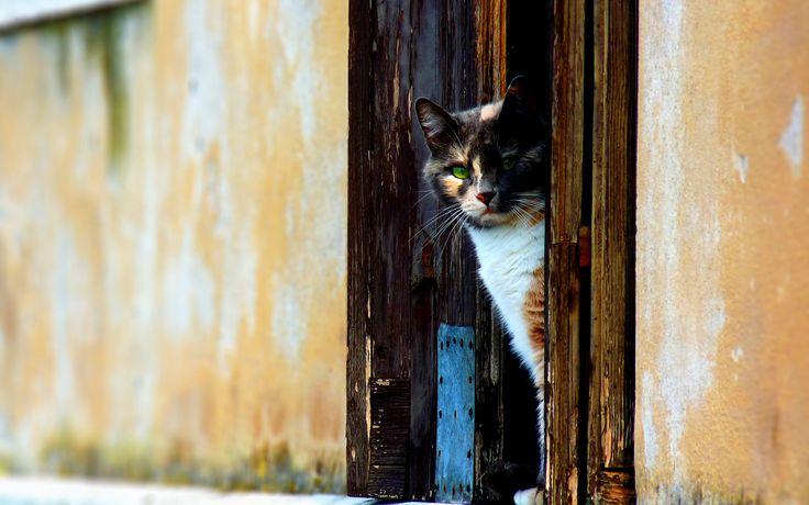 Fond d'écran hd : chat