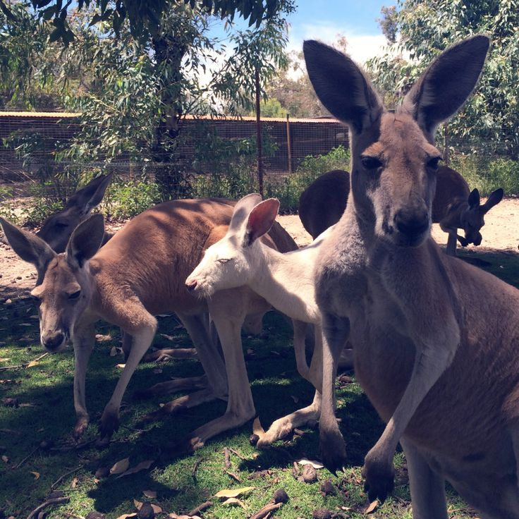 A Day With The Roos