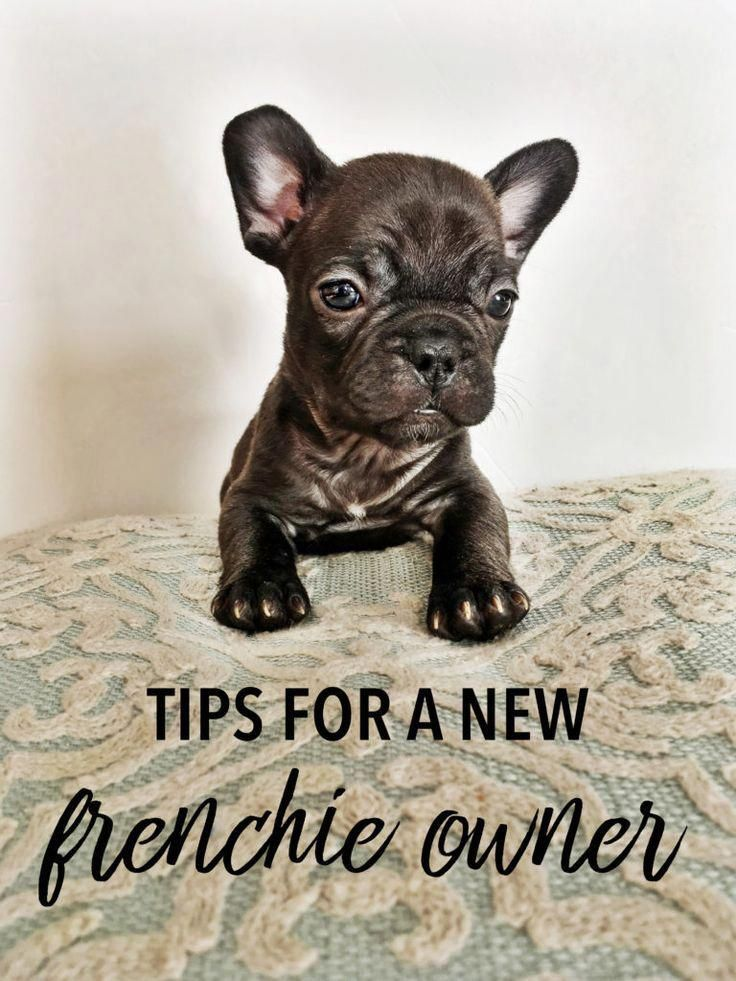 Classy Counted Dog Training Tips In 2020 Bulldog Puppy Training