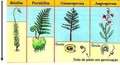 O Reino Plantae em uma abordagem atual