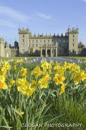 Floors Castle daffodils