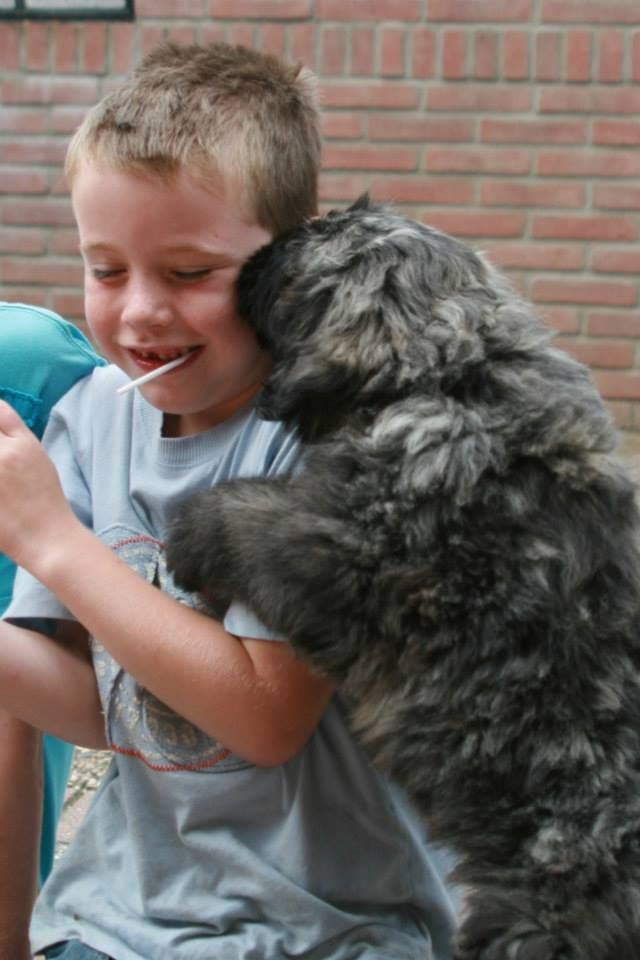 Bouvier des Flandres  Picture from our photo contest with the theme: Bouviers and kids   www.bouvierclub.nl