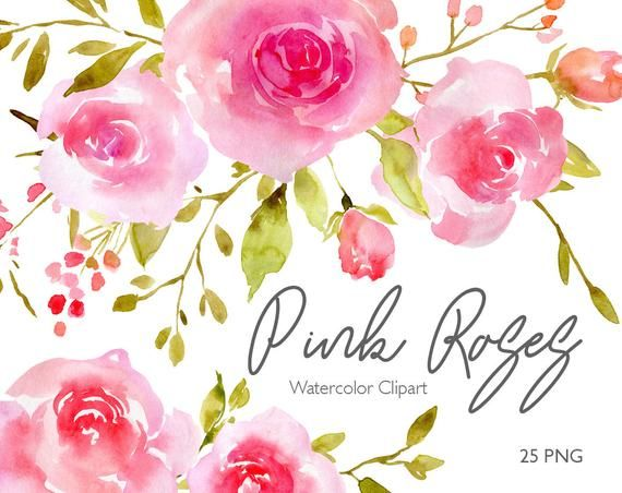 Blush Watercolor Roses Flowers Clipart Digital Instant Download