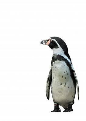 Elke Krone-Pinguin