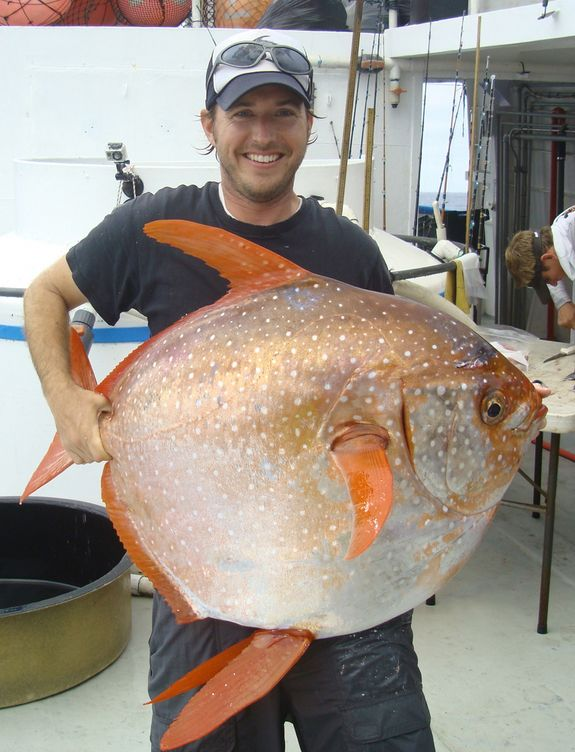 Southwest Fisheries Science Center biologist Nick Wegner holds a captured opah, the first-ever warm-blooded fish..